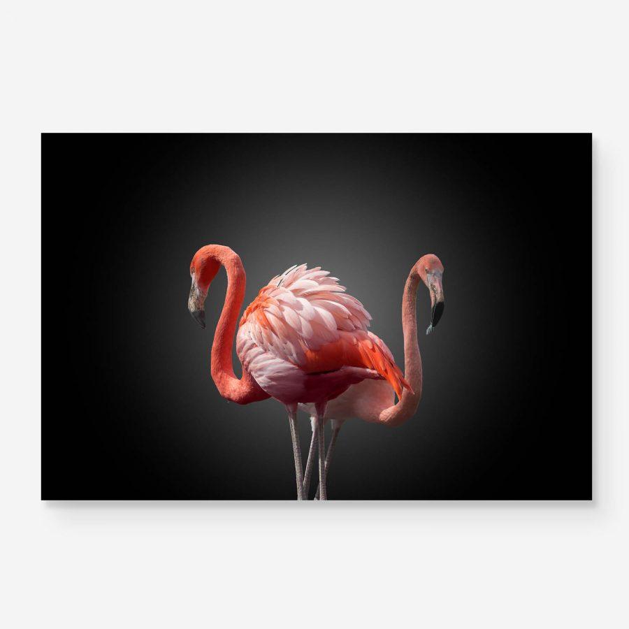 two flamingos portrait with dark background