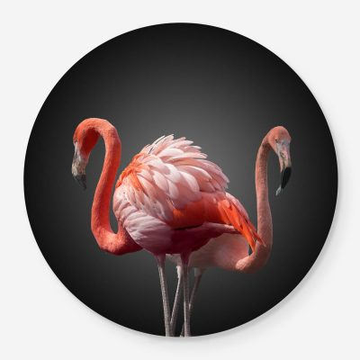 two flamingos portrait