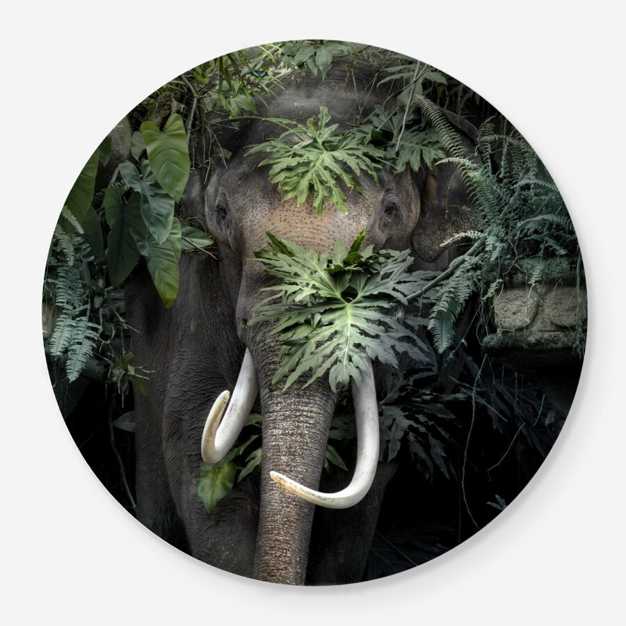 Asian Elephant portrait in the jungle