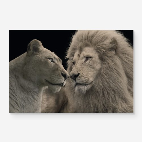 lions giving eachother a nosekiss