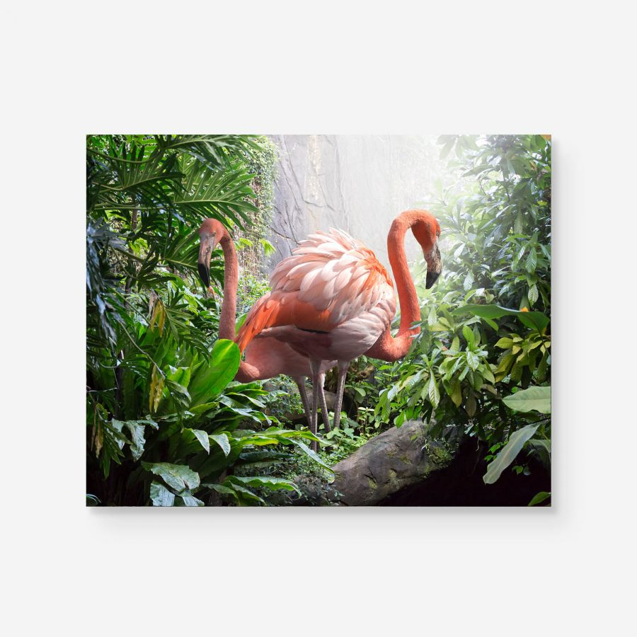 tropic surprise two flamingos in the jungle