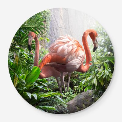 flamingos in the jungle
