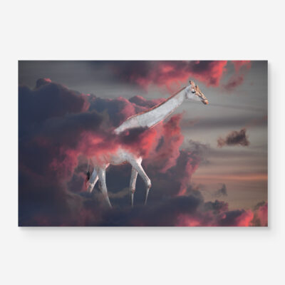 albino giraffe walking in clouds