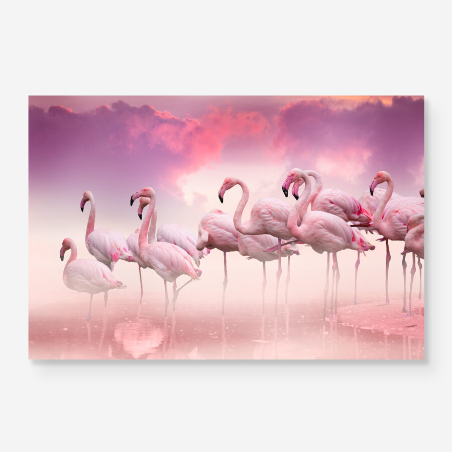 flamingos in pink water