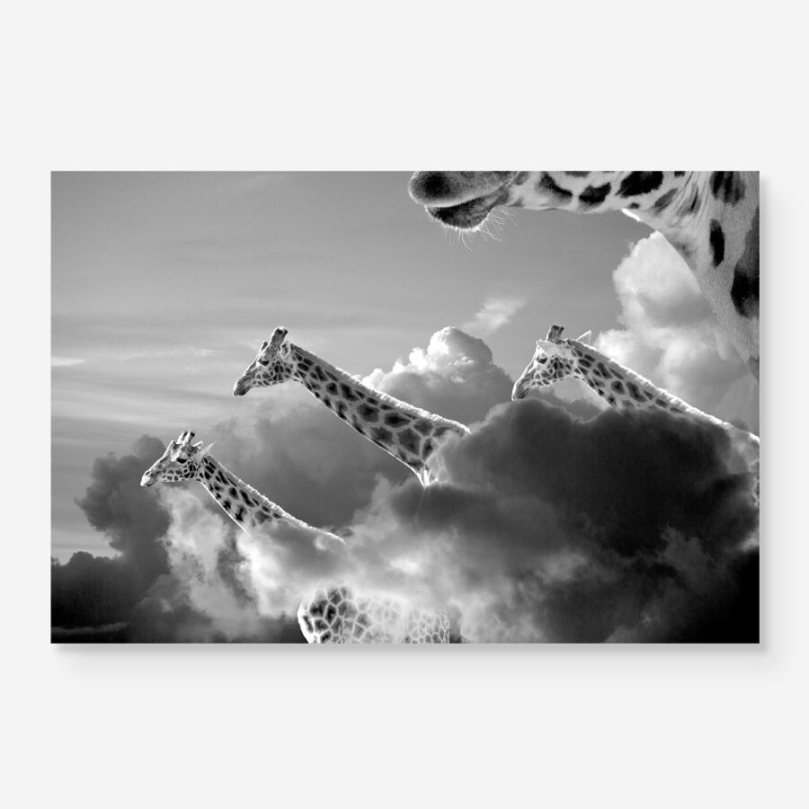 giant giraffes in the clouds